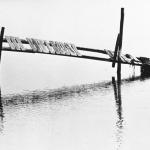 bird-on-pier